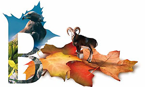 Autunno in Barbagia 2012